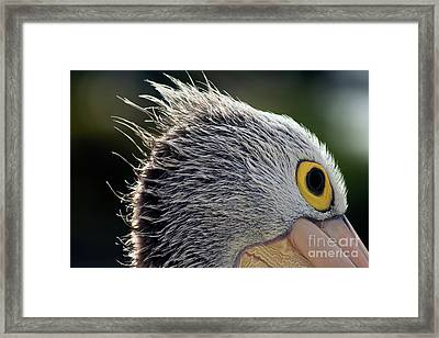 Framed Print featuring the photograph Blowin' In The Wind by Stephen Mitchell