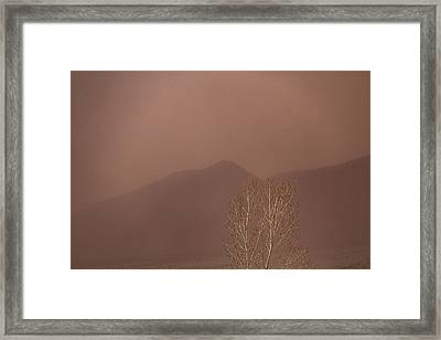Framed Print featuring the photograph Blowing Around by Deborah Hughes