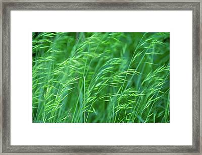 Blowing Green Framed Print