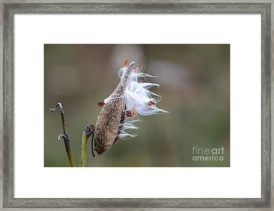 Blowing In The Wind Framed Print by Cindy Manero