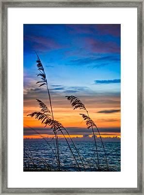 Blowing In The Wind Framed Print by Debra and Dave Vanderlaan