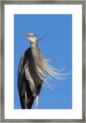 Framed Print featuring the photograph Blowing In The Wind by Jeanne Kay Juhos