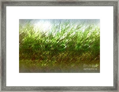 Framed Print featuring the photograph Blowing In The Wind by John Krakora