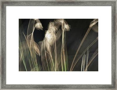 Framed Print featuring the photograph Blowing In The Wind by Roger Mullenhour