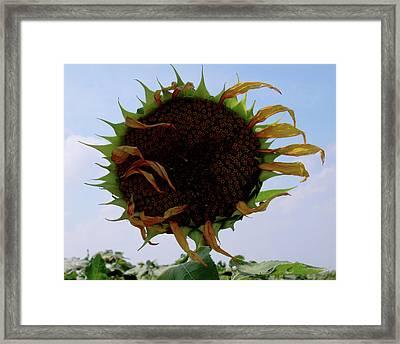 Blown Framed Print by Jeremy Martinson