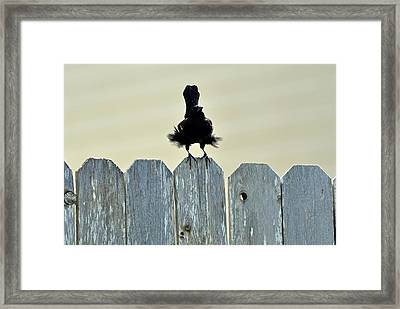 Framed Print featuring the photograph Blows Your Skirt Up by Teresa Blanton