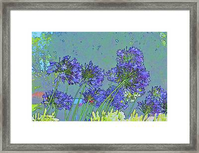 Blue Agapanthus Flowers Bright Abstract Framed Print