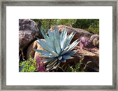 Framed Print featuring the photograph Blue Agave by Kathryn Meyer