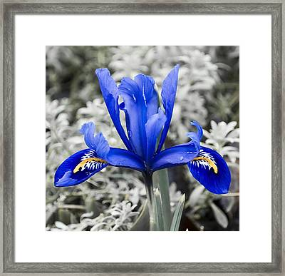 Blue Along Framed Print by Svetlana Sewell