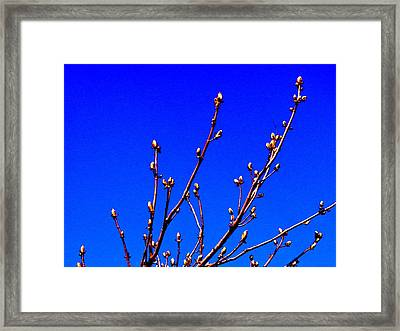 Blue And Blossom Framed Print