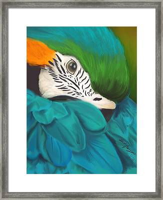Blue And Gold Macaw Framed Print