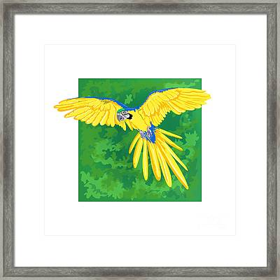 Blue And Gold Macaw Framed Print by HD Connelly