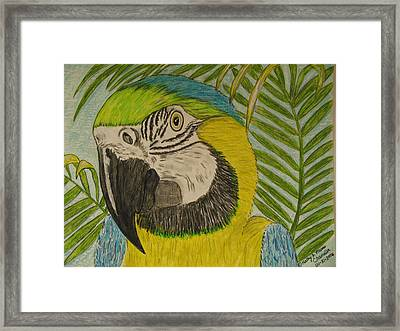 Framed Print featuring the painting Blue And Gold Macaw Parrot by Kathy Marrs Chandler