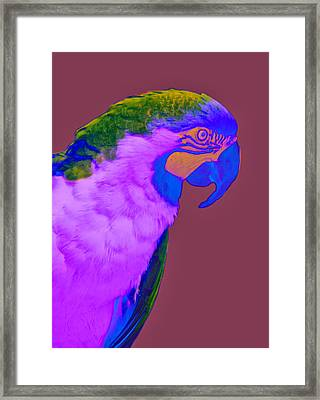 Framed Print featuring the photograph Blue And Gold Macaw Sabattier by Bill Barber