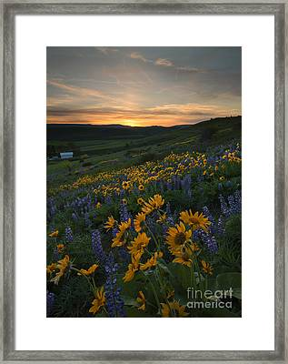 Blue And Gold Sunset Framed Print by Mike Dawson
