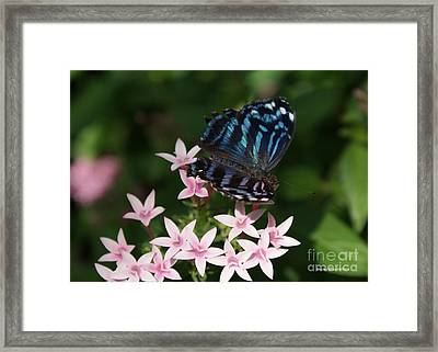 Blue And Pink Make Lilac Framed Print