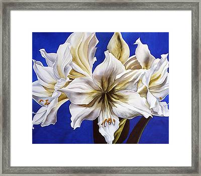 Blue And White Framed Print by Alfred Ng