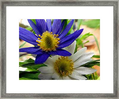 Blue And White Anemones Framed Print