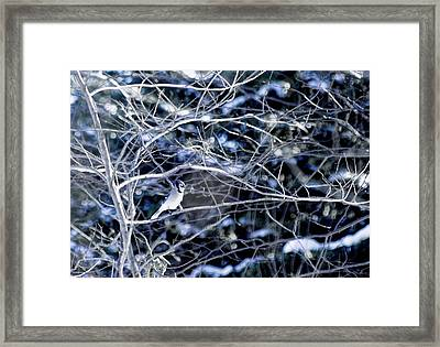 Blue And White Beauty Framed Print