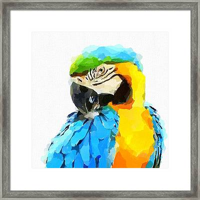 Blue And Yellow Macaw Framed Print by Chris Butler