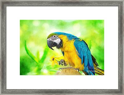 Blue And Yellow Macaw Framed Print by Lois Bryan
