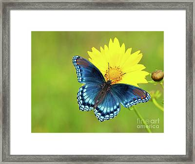 Blue And Yellow On Green Framed Print