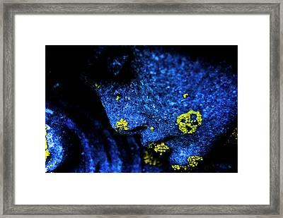 Blue Angel Face IIi Framed Print by Grebo Gray