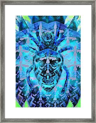 Blue Arachnid Framed Print by Diane Addis