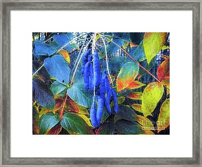 Blue Beans #3 Framed Print by Mona Stut