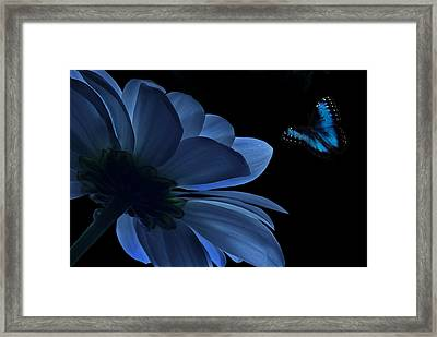 Blue Beauty Framed Print by Marrissia Ruth