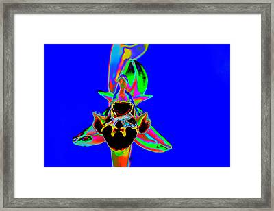 Blue Bee Orchid Framed Print