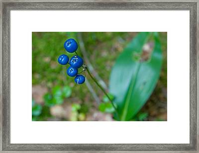 Blue Berries Framed Print