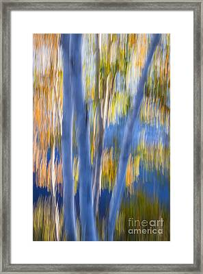 Blue Birches By The Lake Framed Print by Elena Elisseeva