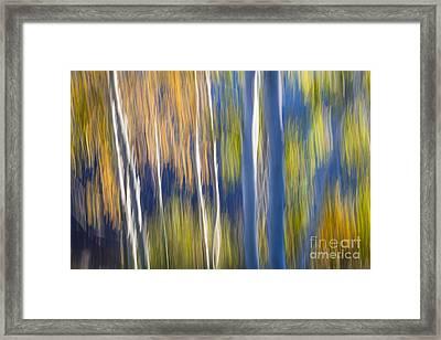 Blue Birches On Lake Shore Framed Print by Elena Elisseeva
