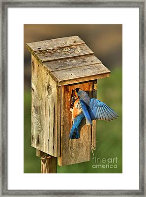 Dinner Delivery Framed Print by Adam Jewell