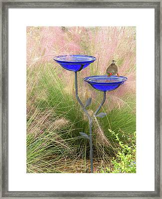 Blue Bird Bath Framed Print by Rosalie Scanlon