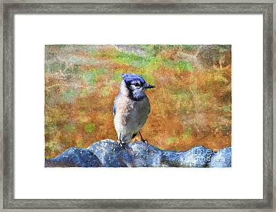 Blue Bird - Digital Paint Framed Print by Debbie Portwood