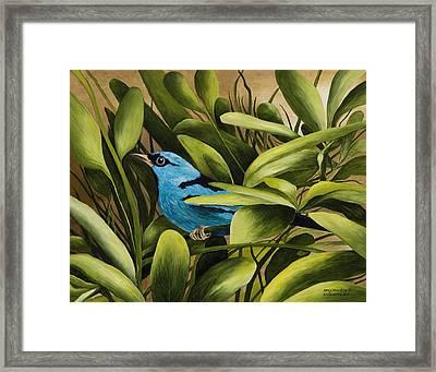 Blue Bird In Branson Framed Print