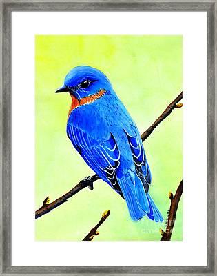 Blue Bird King Framed Print