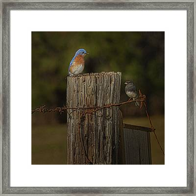 Blue Bird On A Post Framed Print by Thomas Warner