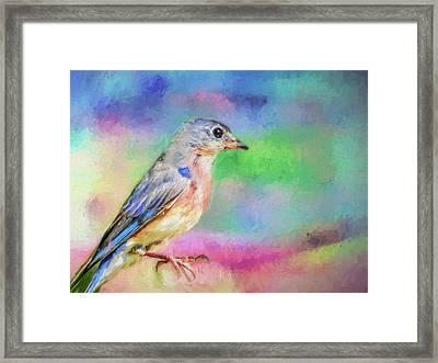 Blue Bird On Color Framed Print