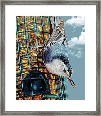 Blue Bird On Feeder Framed Print by Susan Leggett