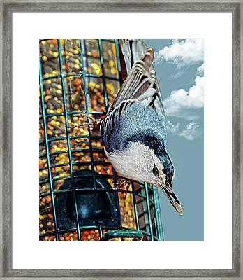 Blue Bird On Feeder Framed Print