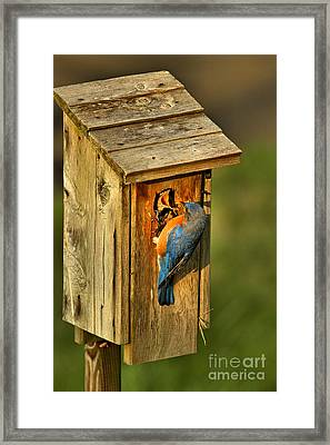 Young And Hungry Framed Print by Adam Jewell