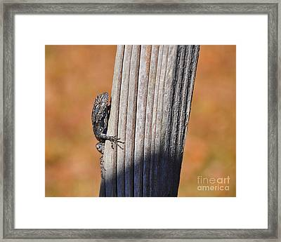 Framed Print featuring the photograph Blue Bits by Al Powell Photography USA