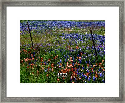 Framed Print featuring the photograph Bluebonnets #0487 by Barbara Tristan