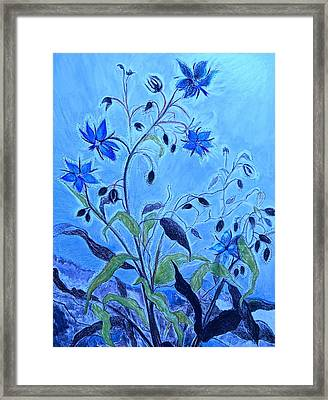Blue Borage Framed Print