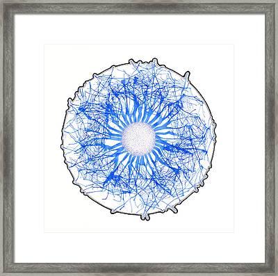 Blue Bubble Framed Print