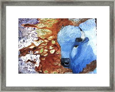 Blue Buffalo Framed Print by David Raderstorf