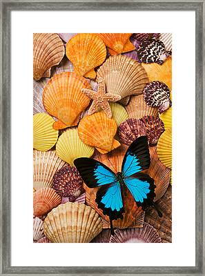 Blue Butterfly And Sea Shells Framed Print by Garry Gay